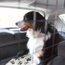 pet taxi service milton keynes