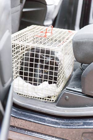 Cat carrier in car
