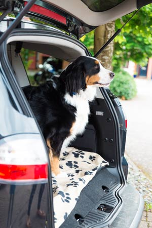 Pet Travel with dog